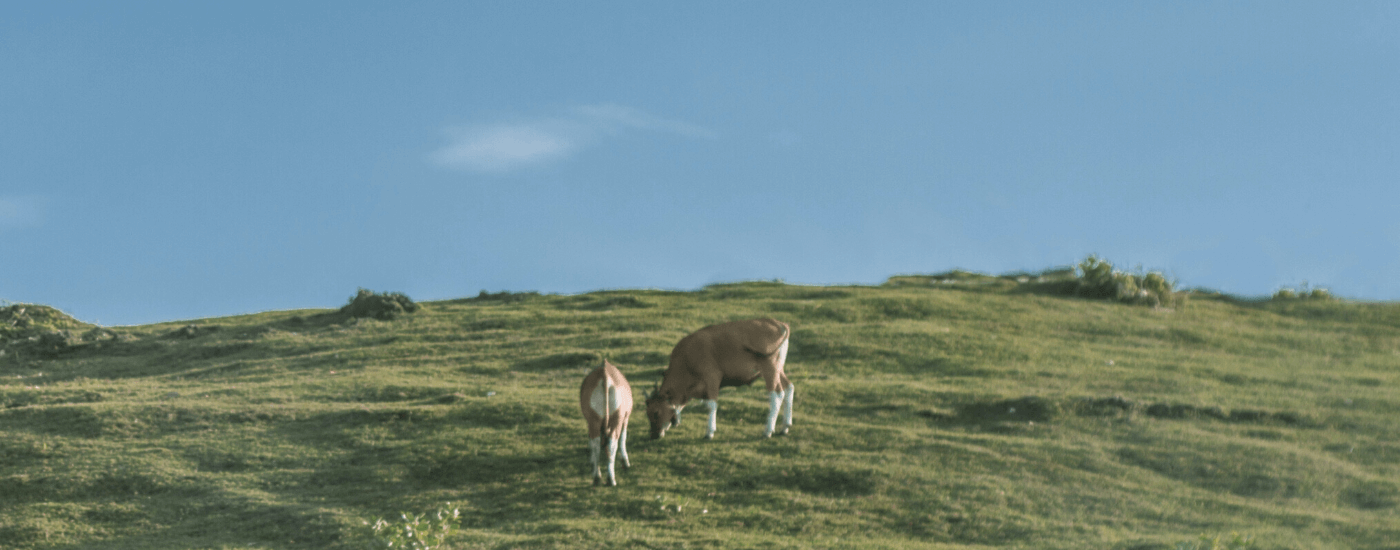 cows on field greenwashing activies