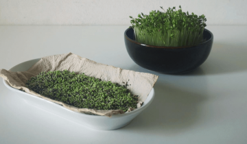 How to make your own micro-greens