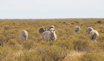 Wool – What you need to know about the winter favourite