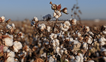 Cotton – What you need to know about the most non-food crop grown in the world